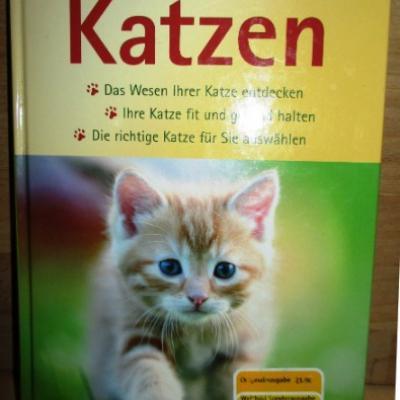Ratgeber für Katzen - thumb