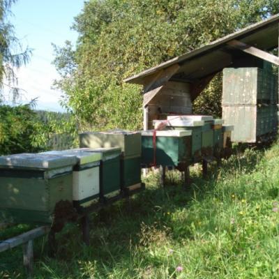 Bienenjungvölker - thumb