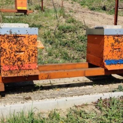 Bienenvölker aus Hobby-Imkerei - thumb