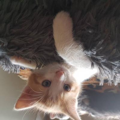 Babykatzen Katzen - thumb