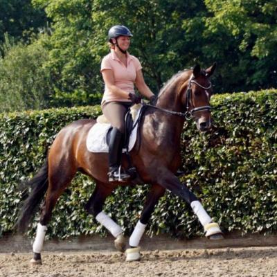 Oldenburger Pferd zu verkaufen - thumb