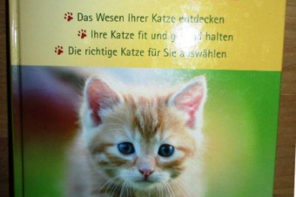 Ratgeber für Katzen