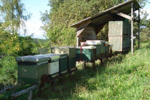 Bienenjungvölker