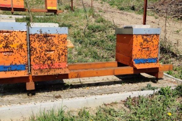 Bienenvölker aus Hobby-Imkerei