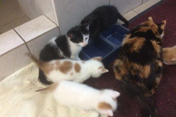 Katzen 10 Wochen, stubenrein - € 10