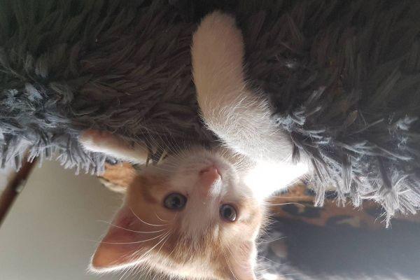 Babykatzen Katzen